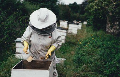 apiculteur chambre hôtes gers
